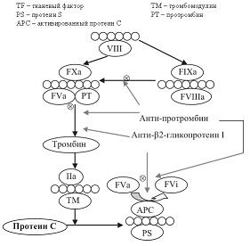 Рисунок 3: Антитела к протромбину и β2-гликопротеину I нарушают формирование протромбиназного комплекс.