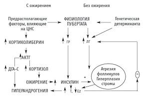 Рисунок 2: Патогенез СПКЯ у пациенток с инсулинорезистентностью.