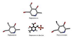 Рисунок 3: Основные формы витамина В6.